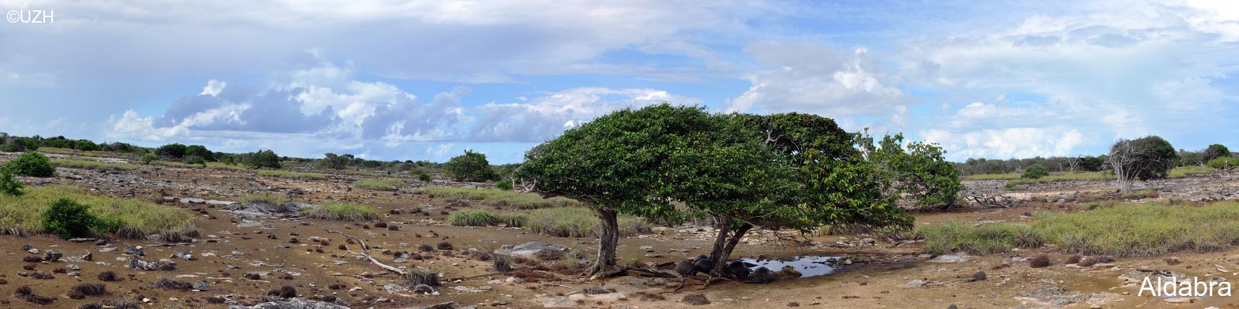 Aldabra1